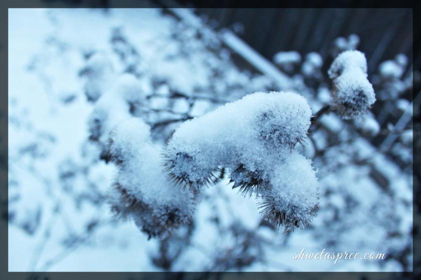 IMG_9841new_Fotor.jpg